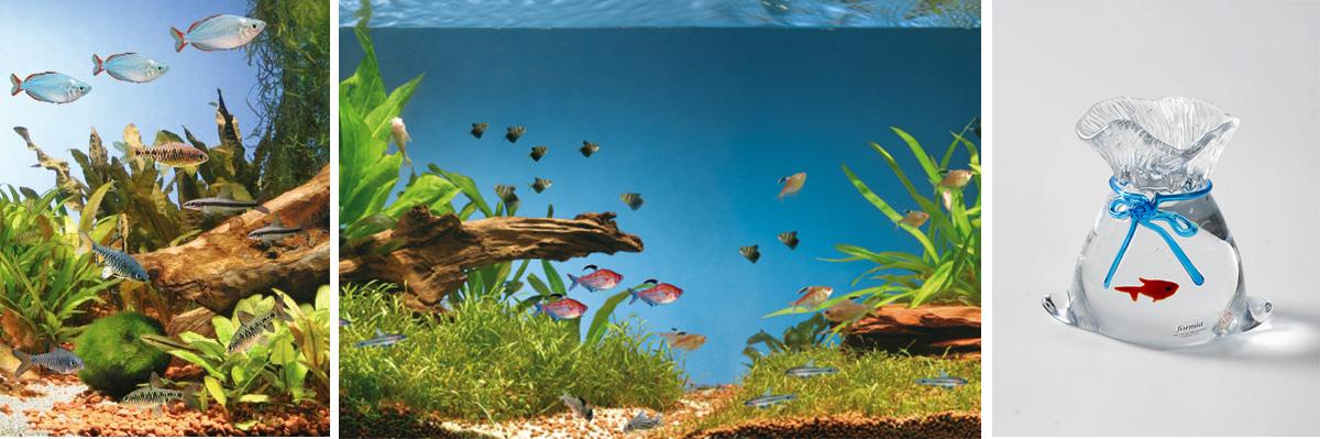 Выбор рыб для аквариума