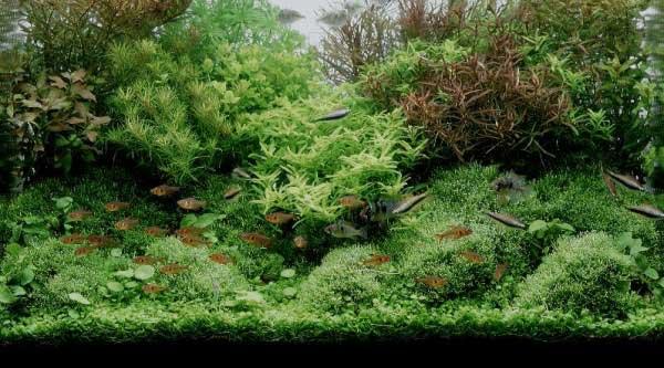 Оформление аквариума живыи камнями