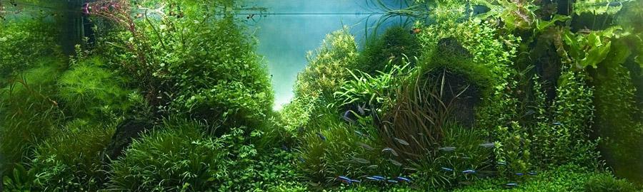 Дизайн аквариума в вопросах и ответах