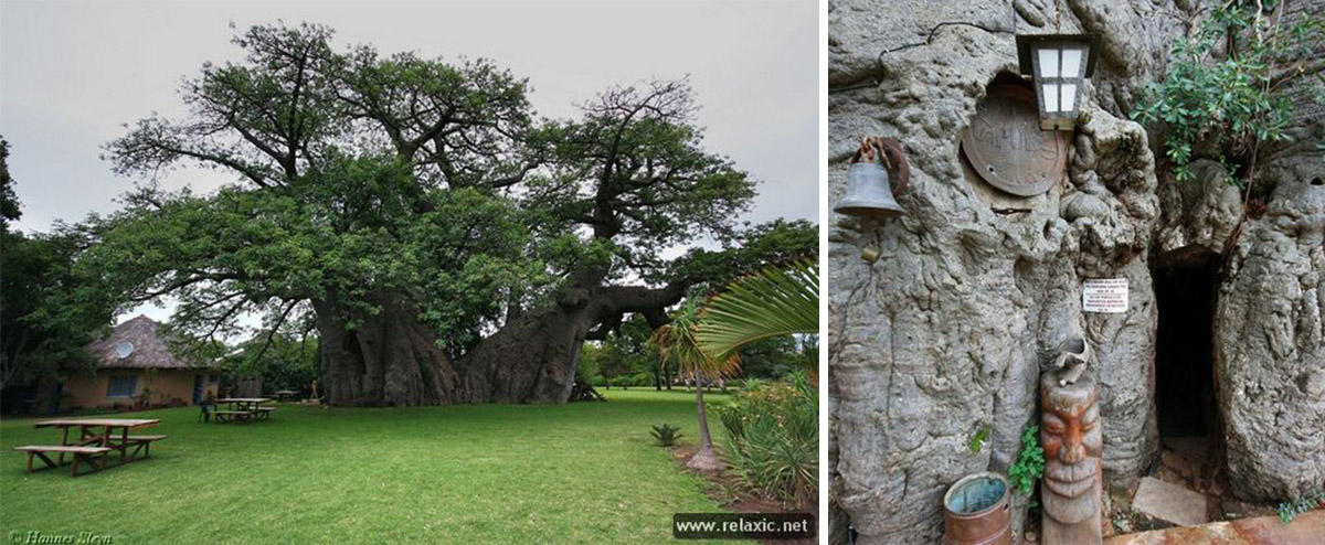 Дизайн входа вбар Baobab Tree Bar