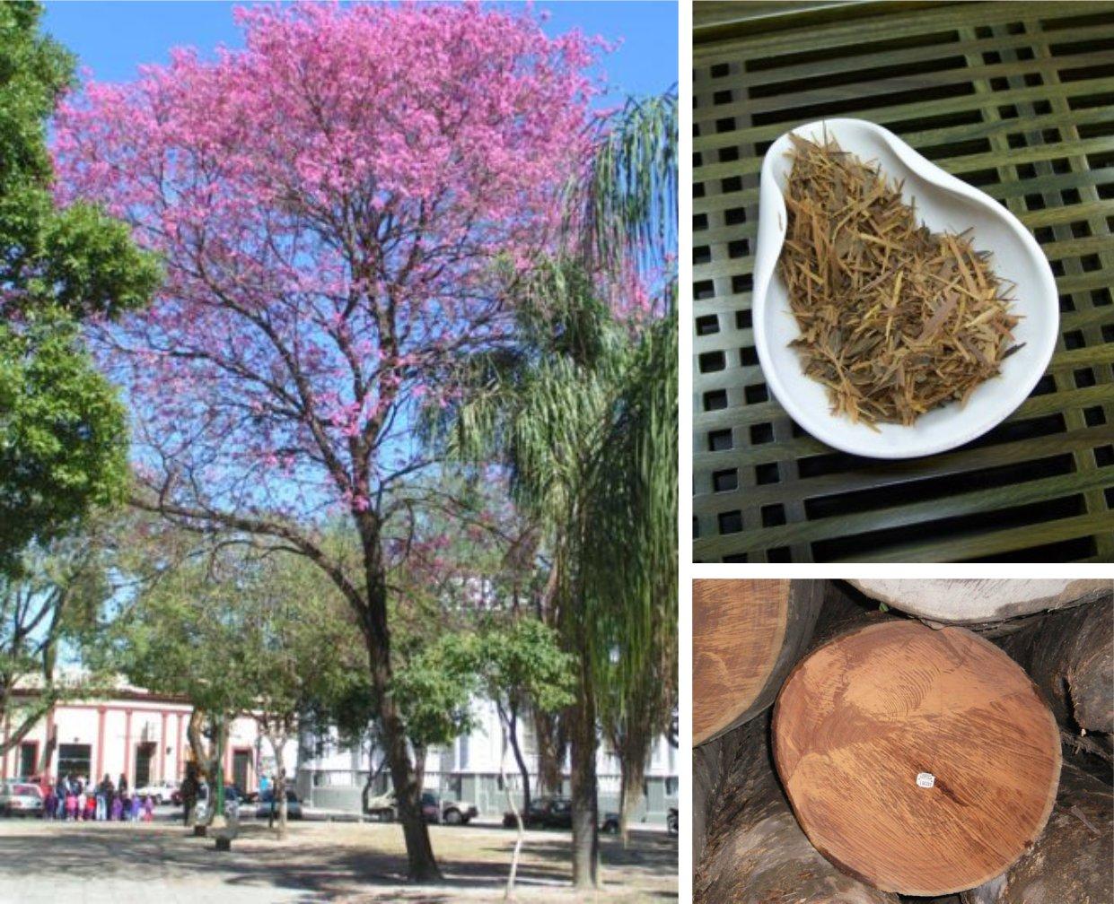 лапачо (Lapacho) чай из дерева инков